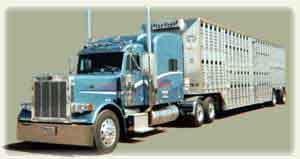 Beef Corp Cattle Trucks